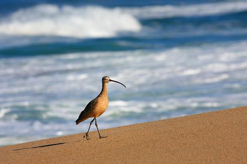 Fort Ord Dunes Workshop Participant example of coastline sea bird
