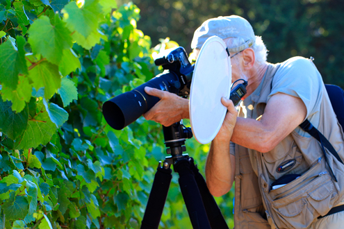 David Gubernick holding a reflector and photographing grape vines