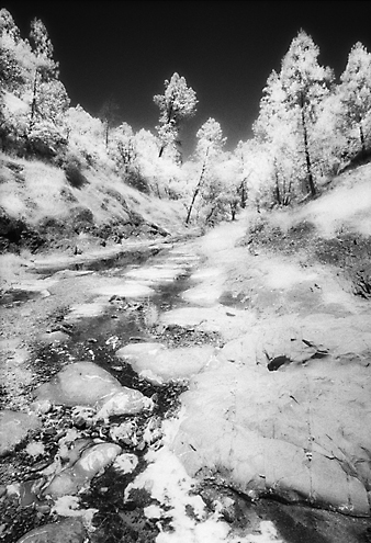 It was so searing hot on this summer day it was any wonder how there was even a trickle of water left at the headwaters of the Pajaro River along the Pecheco Creek North Fork high up in the Diablo Mountains.