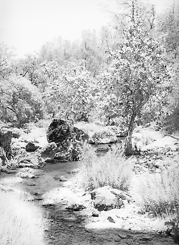 It was so searing hot on this June summer day that I portrayed the white hot heat as snow for an ironic twist along the Pecheco Creek North Fork up in the Diablo Mountains.