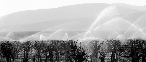 One of the first vineyard photos I ever took while on my way to photograph the Sierras. The backlit white fans of water set atop a perfectly cut horizon line of pruned grapevines against layers of hills and mountains at the edge of the California Central Valley caught my attention after I just missed the crop duster zooming by overhead.
