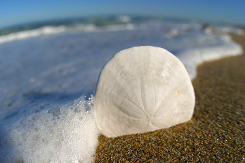 Sand dollar found onsite, propped up, shot with a fisheye lens just 2 inches away, and yes, I got wet.