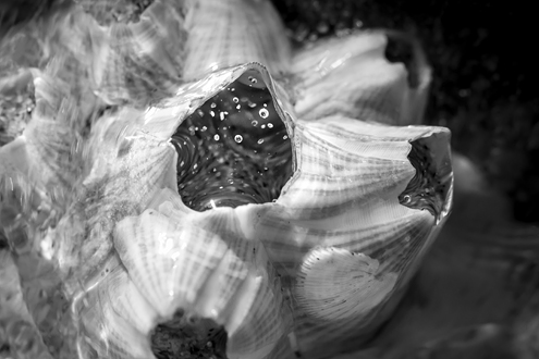 Bubbles are released through swirling water passing through an extreme close up of barnacles.