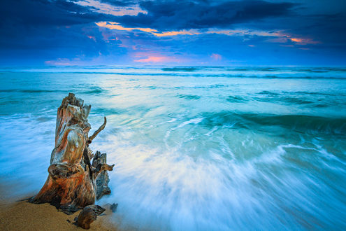 The ancient ruins of a once great tree still stands watch over the rising and falling of the tides on this tropical beach at sunrise on Kauai's eastern shore.