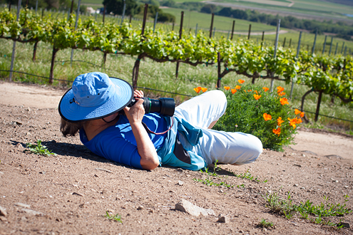 Pessagno Vineyard Workshops - participant photographing in the vineyard