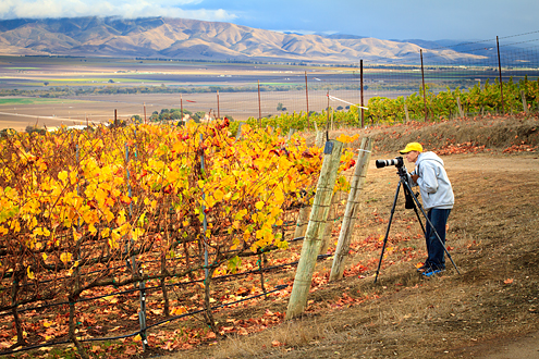 Pessagno Vineyard Workshops - participant photography fall colors in the vineyard