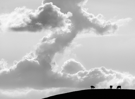 Clouds in the shape of a Z with silhouetted cow on a hill in the foreground