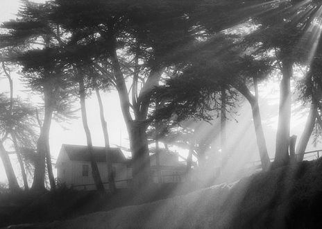 Filted sunlight shining through coastal trees and fog