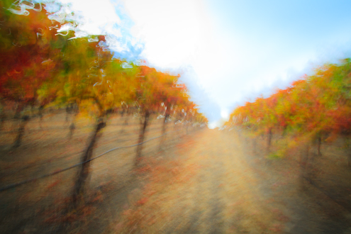 Photo of an autumn vineyard in a painterly style
