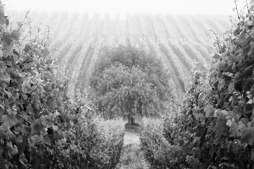 Some of the world's best Pinot Noir and Chardonnay come out of the SLH. This collection of more than 100 photos celebrates all seasons of the Monterey wine culture.