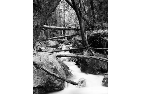 Creek running through a forest.