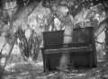Oak tree growing up through a piano in an oak forest.