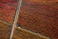 Aerial photo of vineyards with autumn colors.