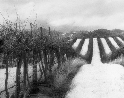 This was shot the same day as Enchanted Grove and Carmel Valley Gentle Rain. I don't usually pull out the infrared film in diffused light, but photographer David Gubernick, whom I was with, inspires me to try new things I wouldn't normally. Photographers seem to concentrate, for the most part, on plush green vineyard rows, but I'm more caught up in the chaotic dense tangle of the dark brown vines in the starkness of winter.
