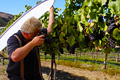Photographer demonstrating how to photograph grapes in a vineyard and holding a reflector.