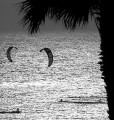 2 kite surfers on a shimmering ocean framed by a palm tree silhouette.