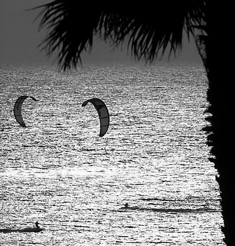 Malibu is the birthplace of kite surfing. It's amazing the speed and control achieved from just a little ocean breeze. I narrowed the view from my friend's north Malibu condo to 2°, framed with the neighbor's palm tree 1/8th mile away, and snapped over 50 shots before these surfers finally crossed in just the right place in my composition. Wildlife photography involves a lot of patience.