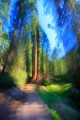 Looking down a trail dappled with sunlight and surrounded by giant redwood trees.