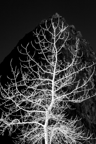 The outer edges of this wintery white tree fit perfectly inside the shape of the shadowy mountain peak behind it at sunrise in Yosemite Valley. This photograph was accepted into the 2014 Center for Photographic Juried Portfolio Exhibit.